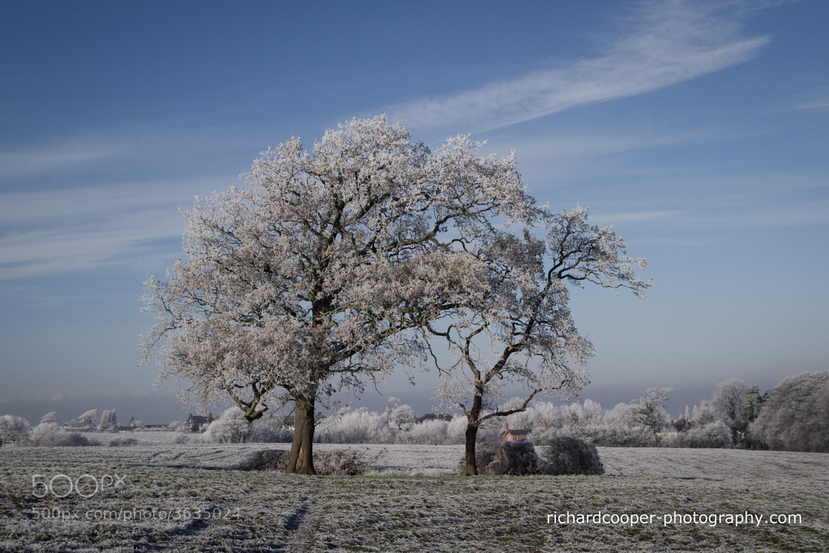 Photograph Winter by Richard Cooper on 500px