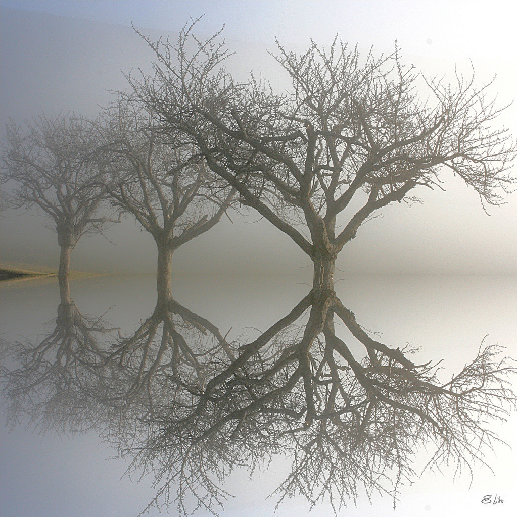 Photograph Mes arbres imaginaires by Willy Revel on 500px