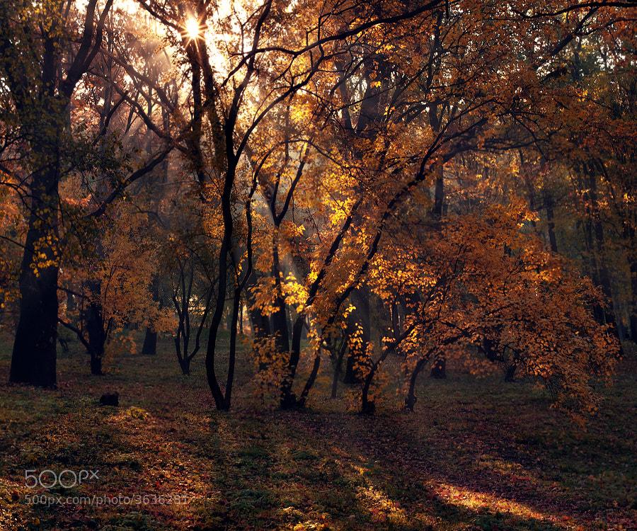 Photograph Untitled by alexandru popovschi  on 500px