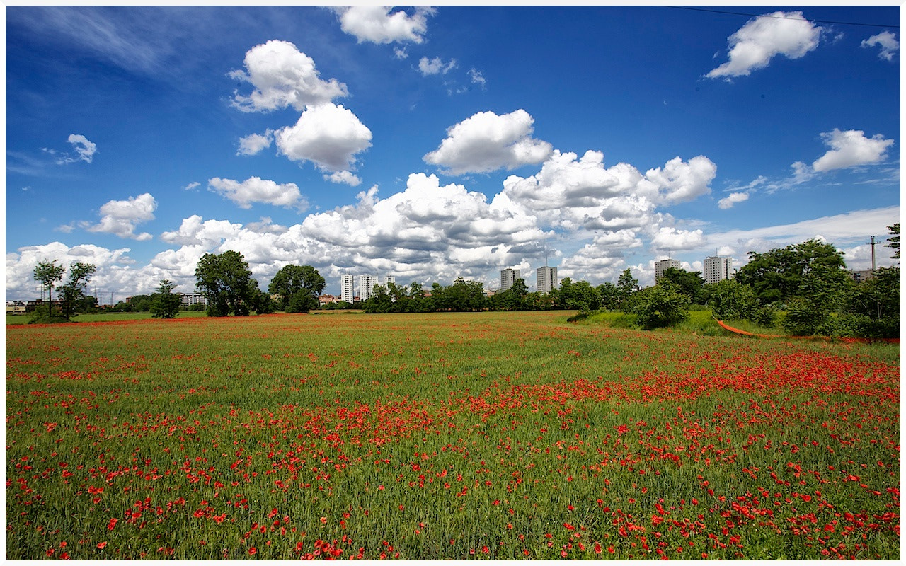 Photograph Clouds,skyscrapers,poppies by Gianluca Gobbi on 500px