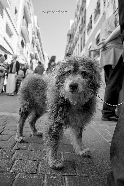 """Photograph """"-Acabo de conocerte, y ya te quiero..."""" by Tonymadrid  on 500px"""