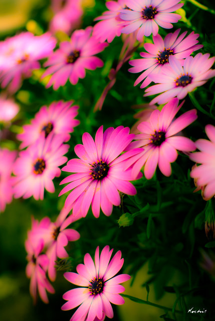 Photograph Spring flowers by Randy Kochis on 500px