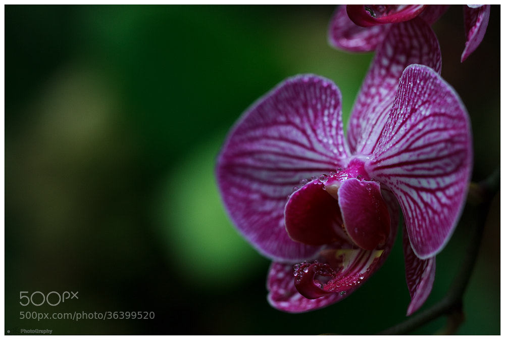 Photograph Lips and Drops by Tobi K on 500px