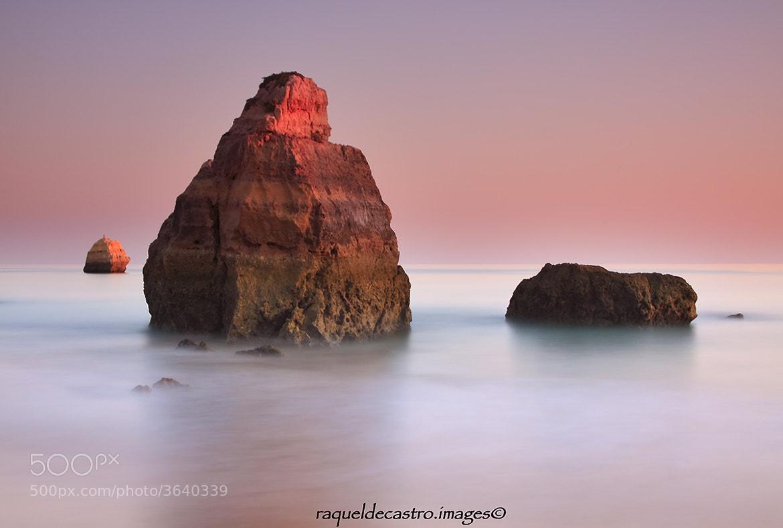 Photograph Tangerine dreams by Raquel de Castro on 500px