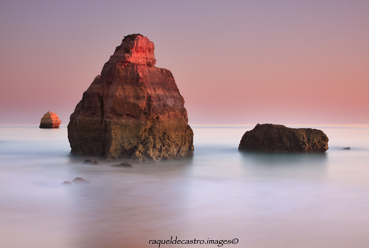 Photograph Tangerine dreams by Raquel de Castro on 500px