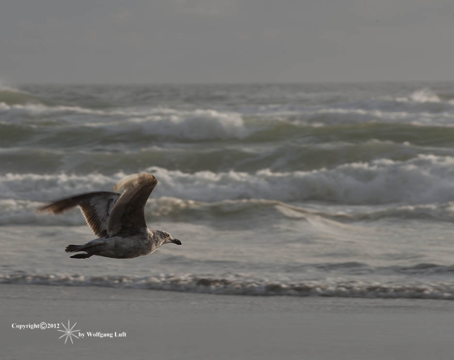 Photograph Seagull's Evening Flight , revised version by Wolfgang Luft on 500px