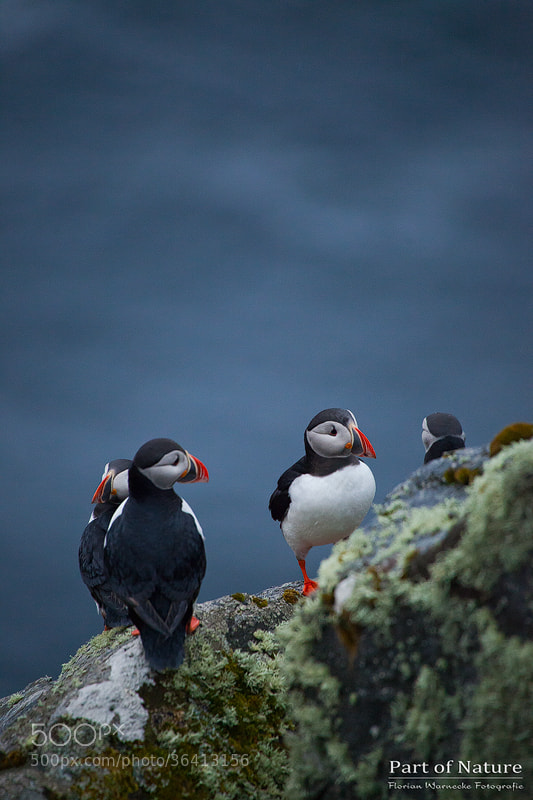 Photograph Little pow wow by Florian Warnecke on 500px