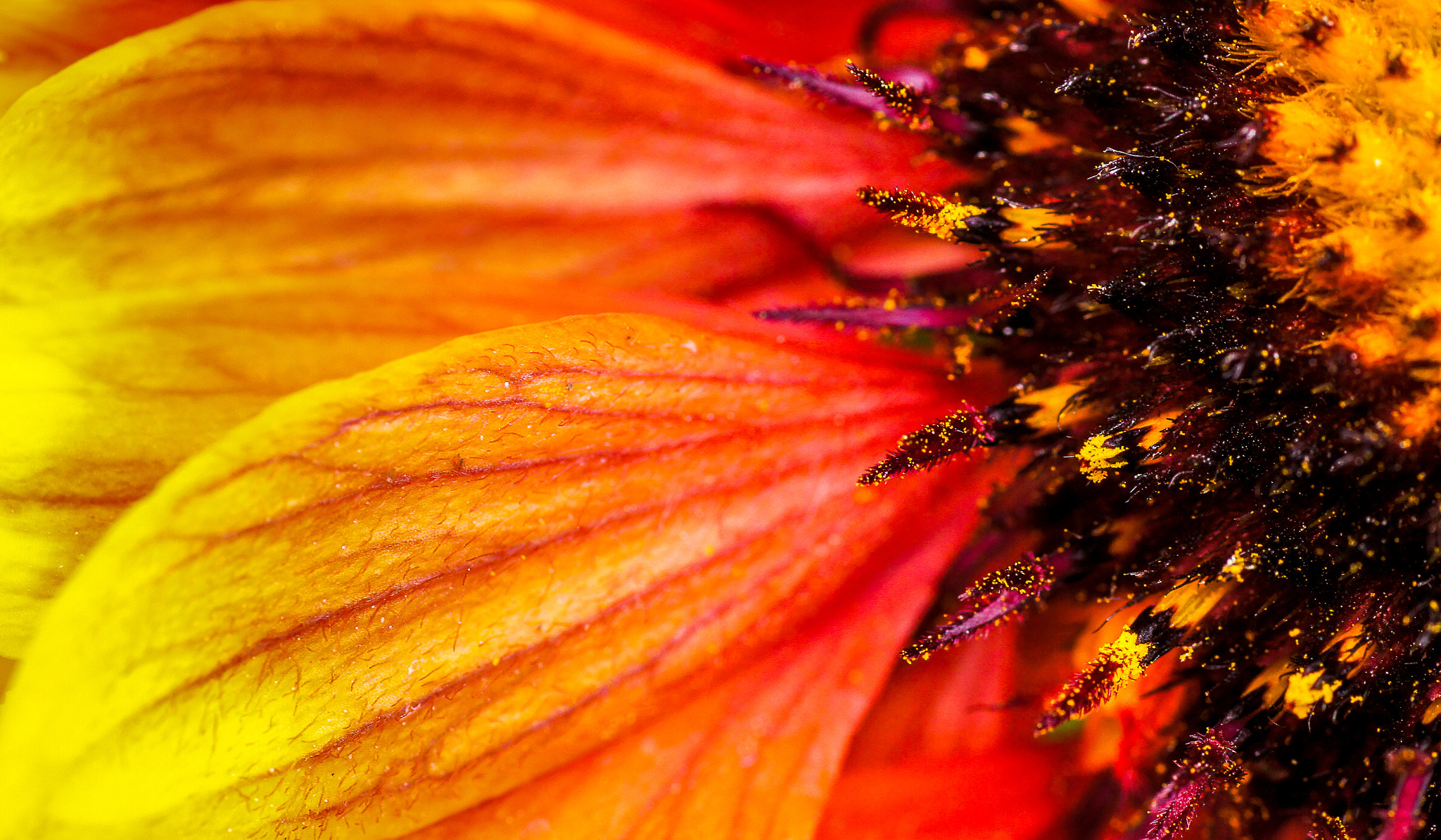 Photograph Fireflower by Lluís Grau on 500px