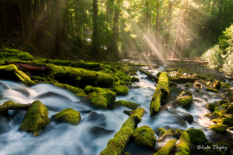 Photograph Mystery Of You by Luke Tingley on 500px