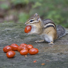 Cherry Tomato Thief by Larry Landolfi (LarryL)) on 500px.com