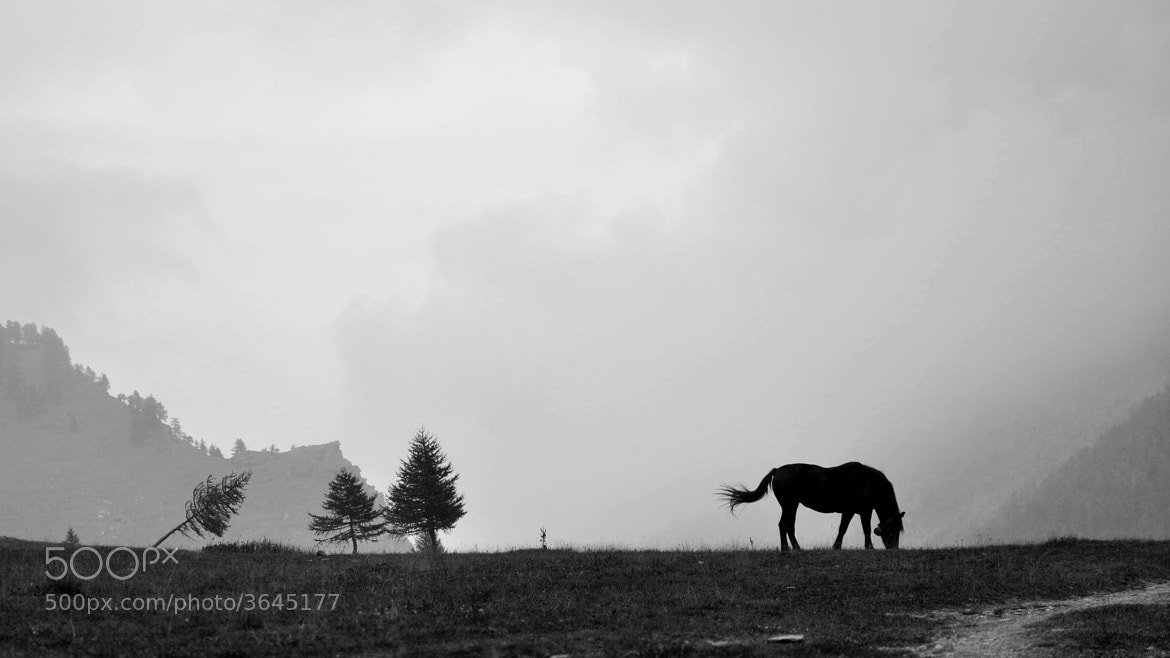 Photograph Into the wild by Alyse on 500px