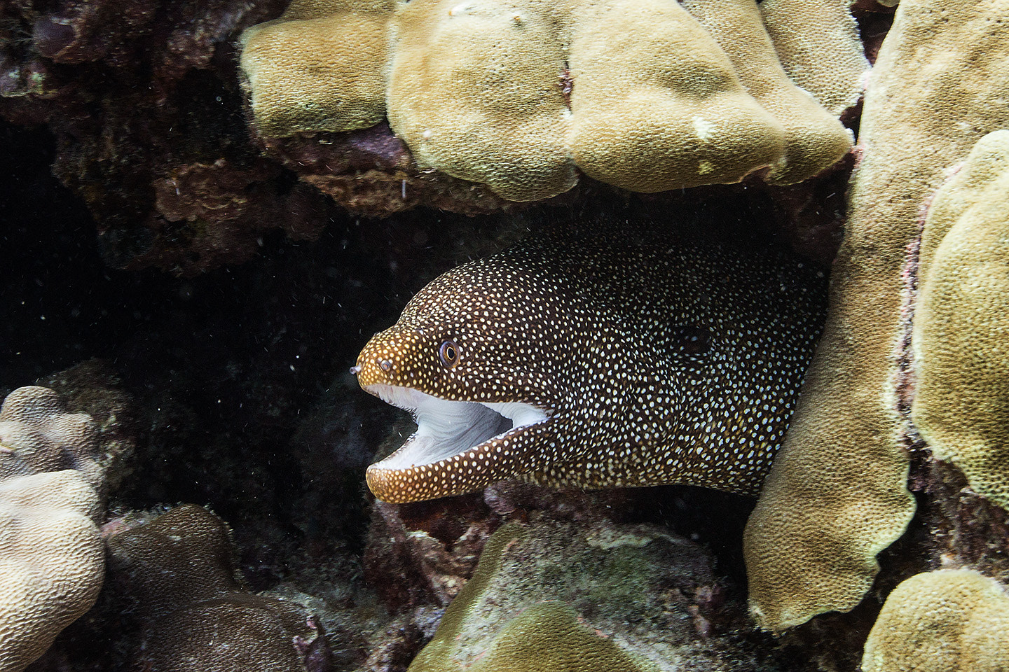Photograph Whitemouth Eel  by Alex St. Jean on 500px
