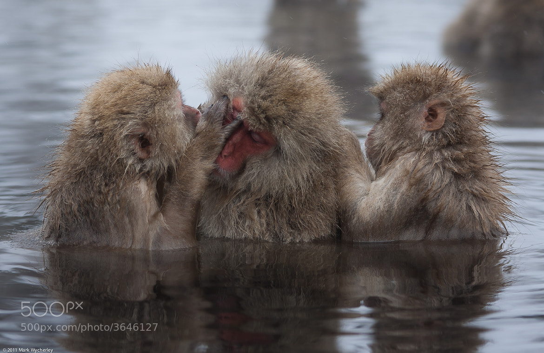 Photograph Monkey Maintenance by Mark Wycherley on 500px