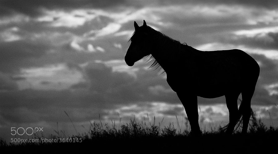 Photograph Lonely Horse by Artem Andronov on 500px
