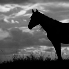 Lonely Horse by Artem Andronov (andronov)) on 500px.com