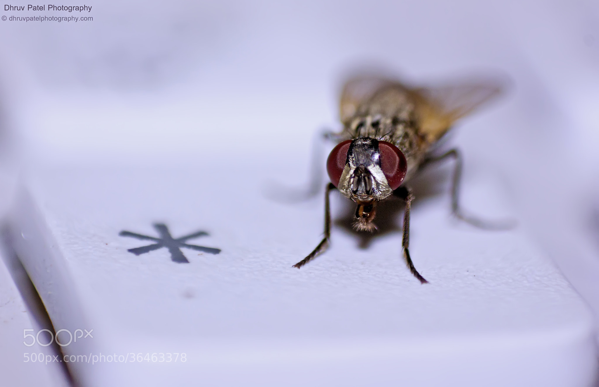 Photograph Dirty Fly by Dhruv Patel on 500px