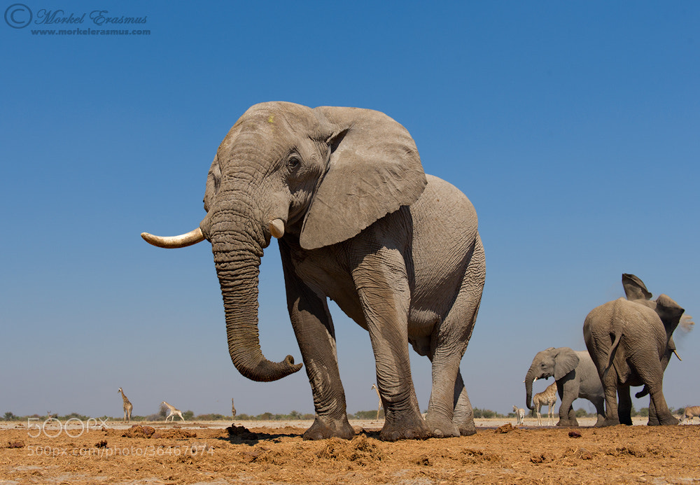 Photograph Looming Giant by Morkel Erasmus on 500px