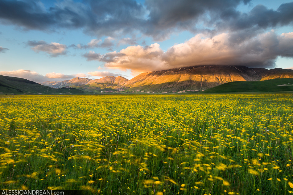 Photograph Yellow Ocean by Alessio Andreani on 500px