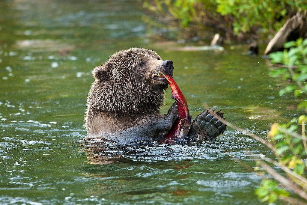 Photograph Food Playing by Buck Shreck on 500px