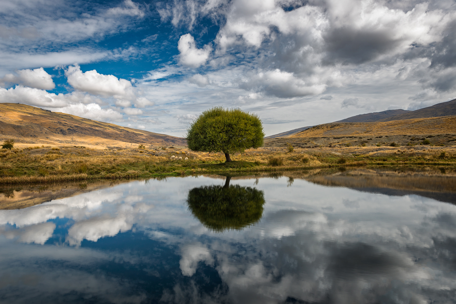 Photograph Nevis Lone Tree  by Danny Xeero on 500px