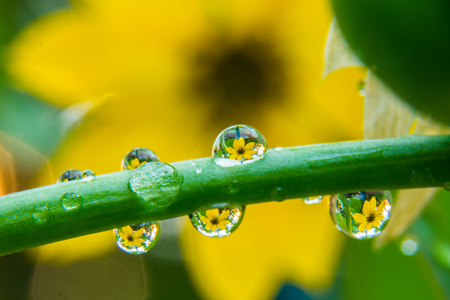 Photograph Flower in a water drop by Andrew Savasuk on 500px