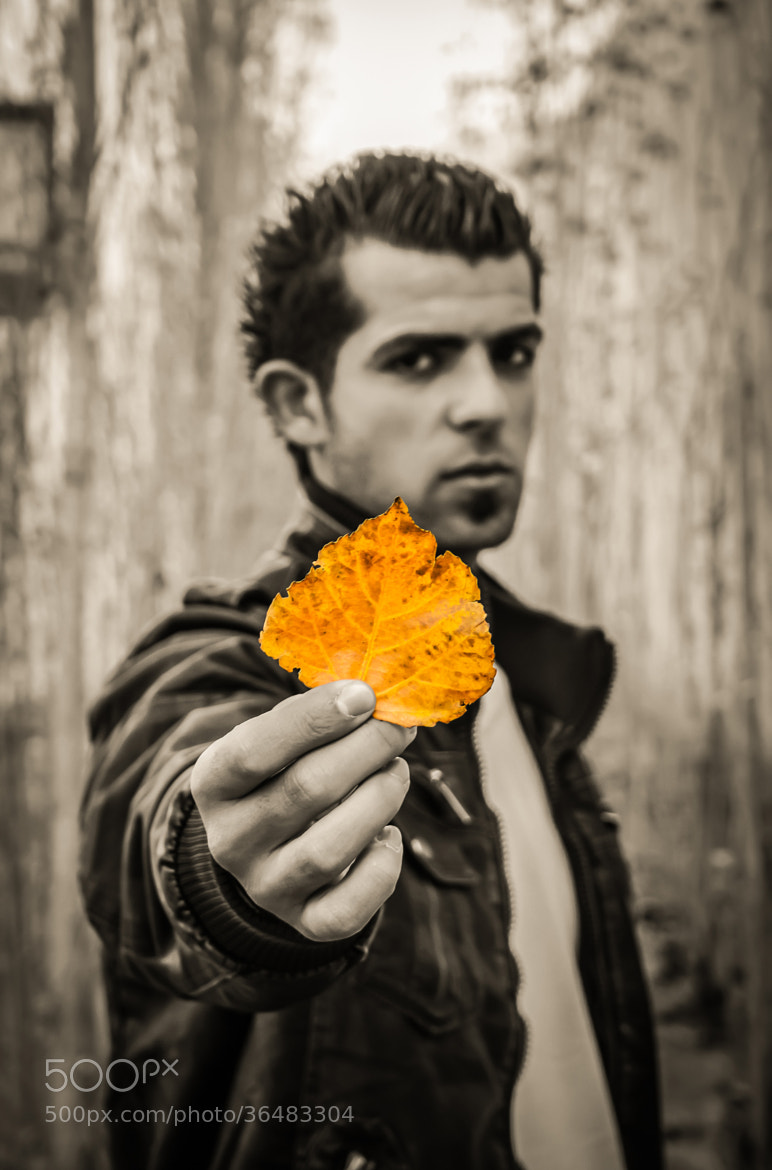 Photograph The Leaf !  by Qusay Abo Baker on 500px