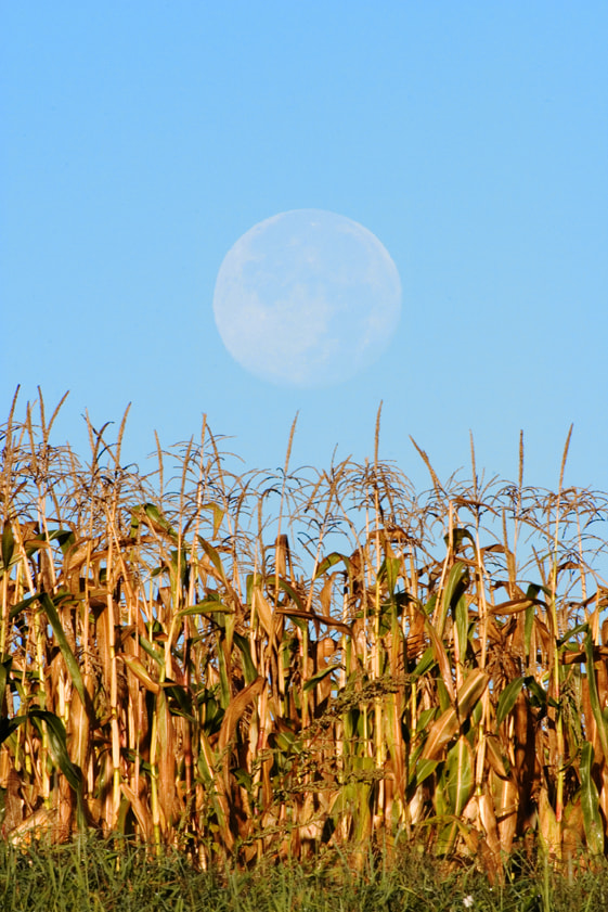 Photograph Harvest Moon by Larry Landolfi on 500px