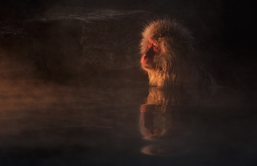 Photograph Melancholy by Marsel van Oosten on 500px
