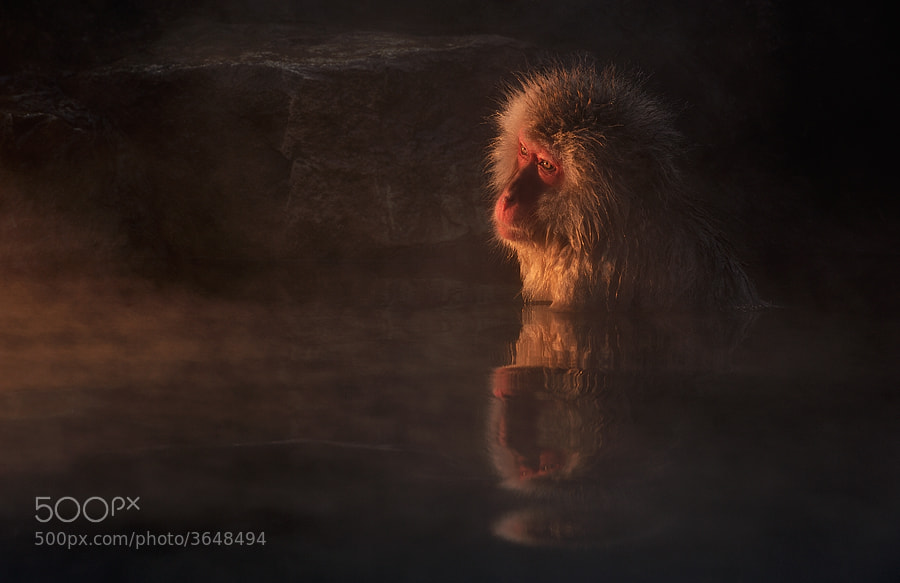 Two of the snow monkey shots that won me the title Nature Photographer of the Year in the International Photography Awards earlier this year, are now featured in the latest edition of Nikon Pro magazine.