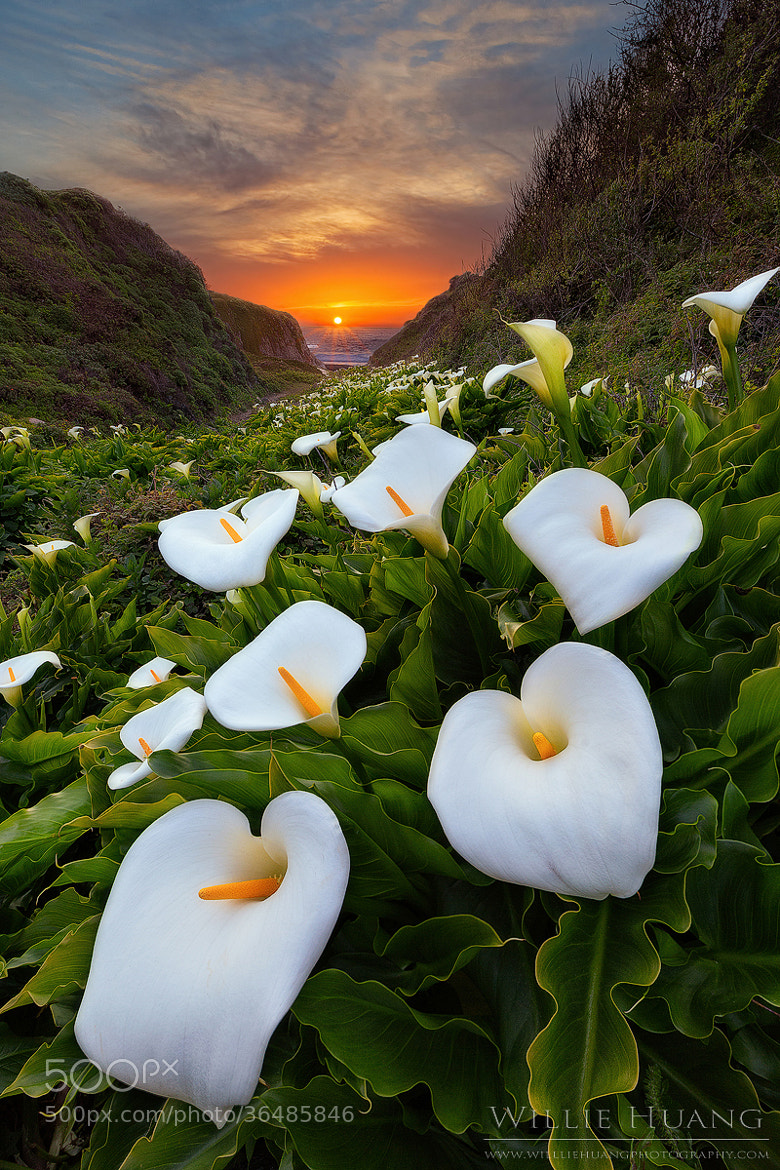 Photograph Paradise Cove by Willie Huang on 500px