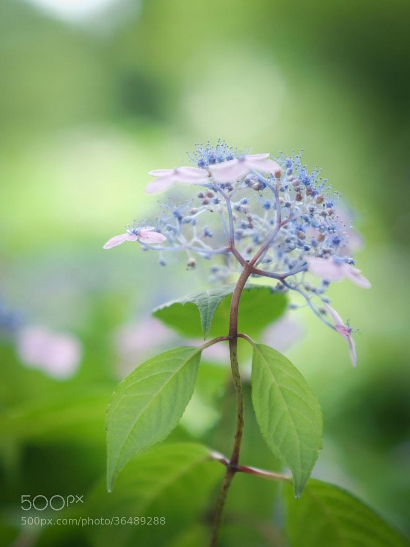 Photograph flower veil by Miyako Koumura on 500px