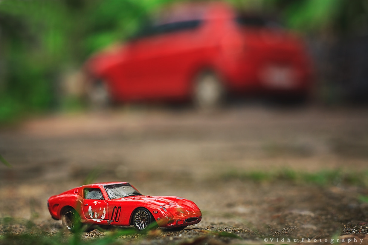 Photograph The small red and the big red by Vidhu S on 500px