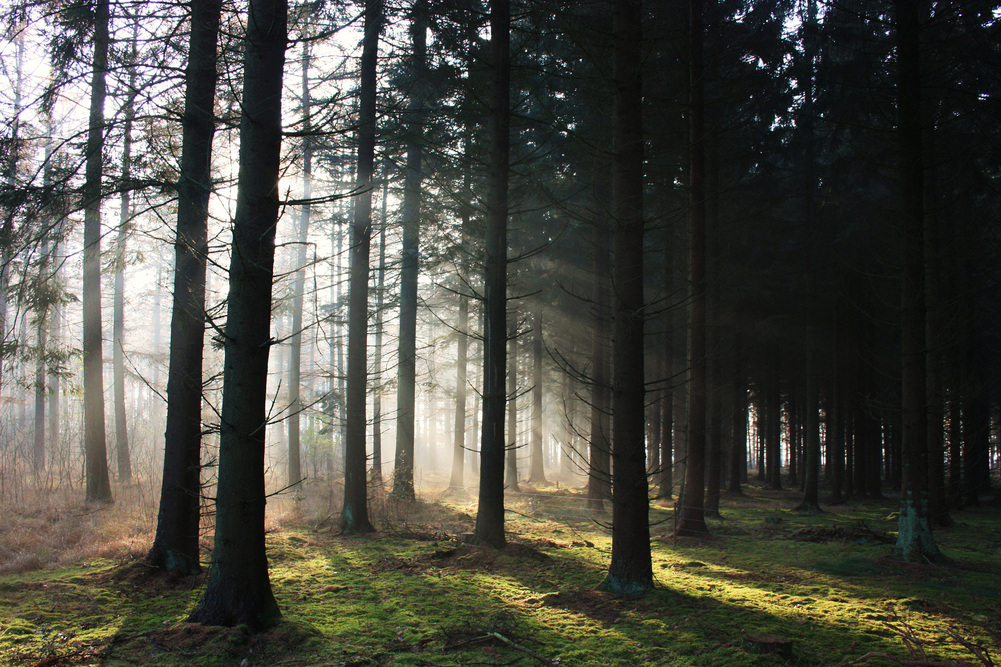 Photograph sunrays in a forest by Rinko Looyenga on 500px