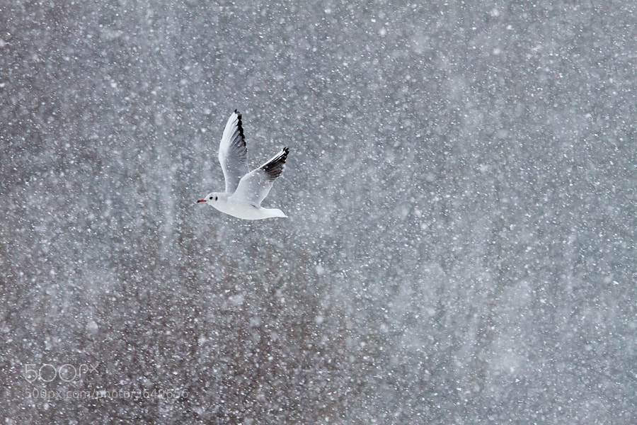 Photograph Whiteout by Roeselien Raimond on 500px