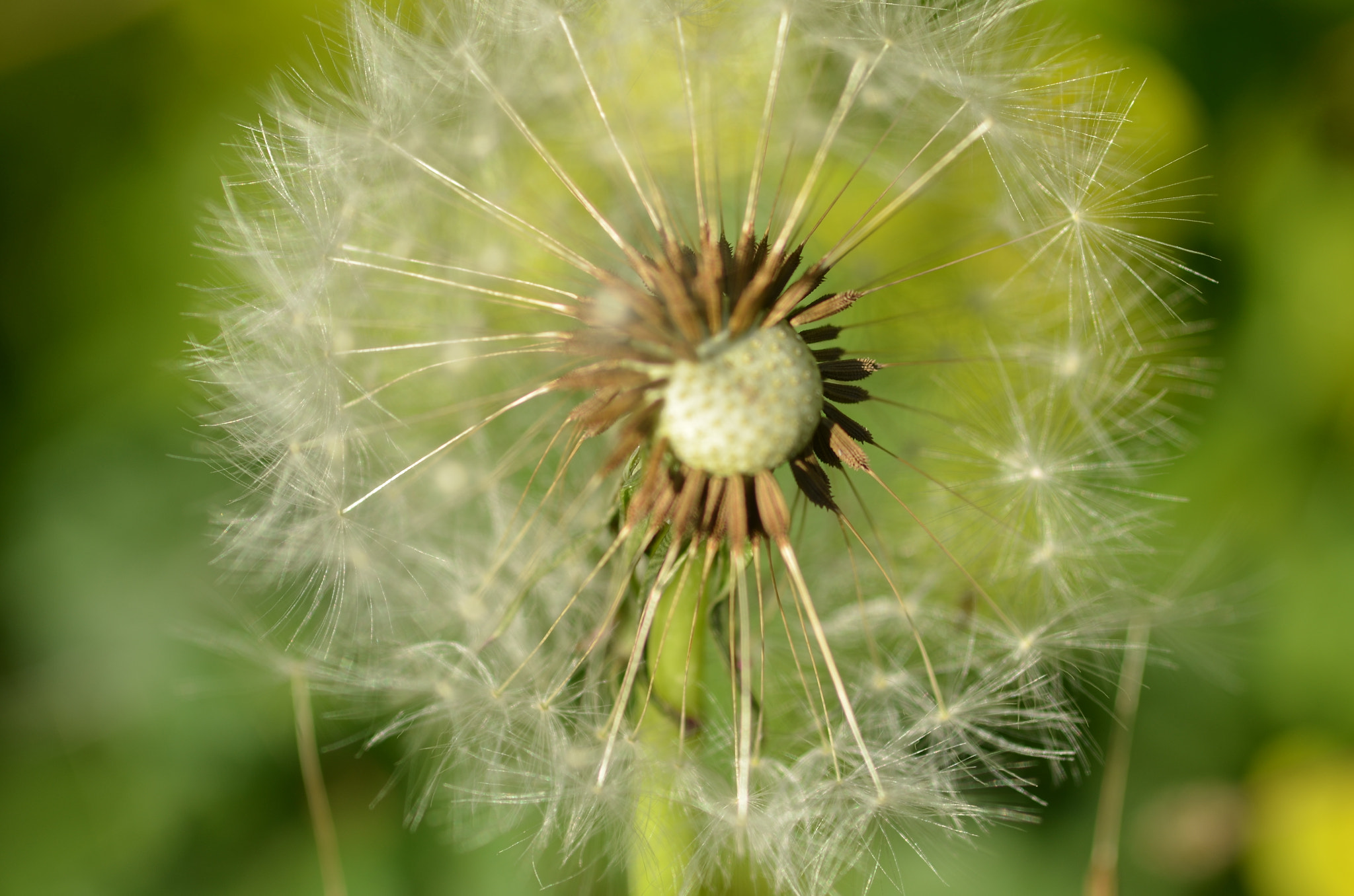 Photograph the dandelion seed by Martyn Addison-Smith on 500px