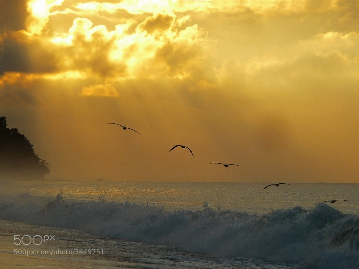 Photograph Pelican Sunrise by Rachel Godden on 500px