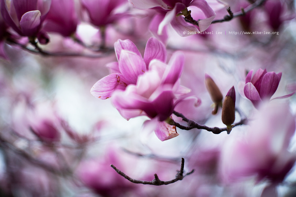 Photograph Spring by Michael Lee on 500px