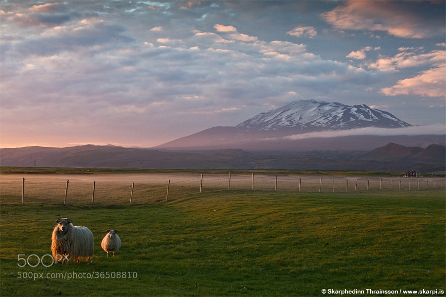 Photograph Life Under the Volcano by Skarpi Thrainsson on 500px