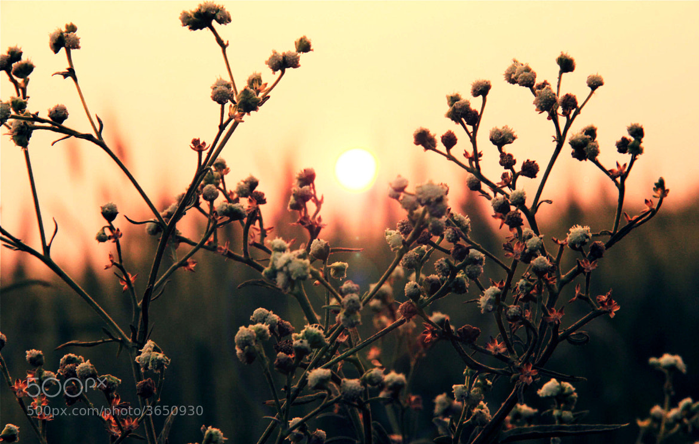 Photograph Dawn by Rahul Barfa on 500px