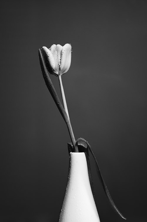 Photograph Black Tulip by Manfred Huszar on 500px