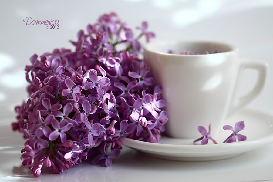 Photograph Lilac by Dommenica on 500px