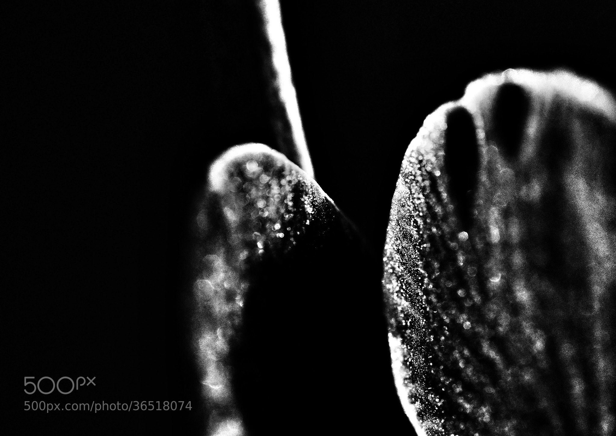 Photograph Monochrome ochridee detail by live impression on 500px