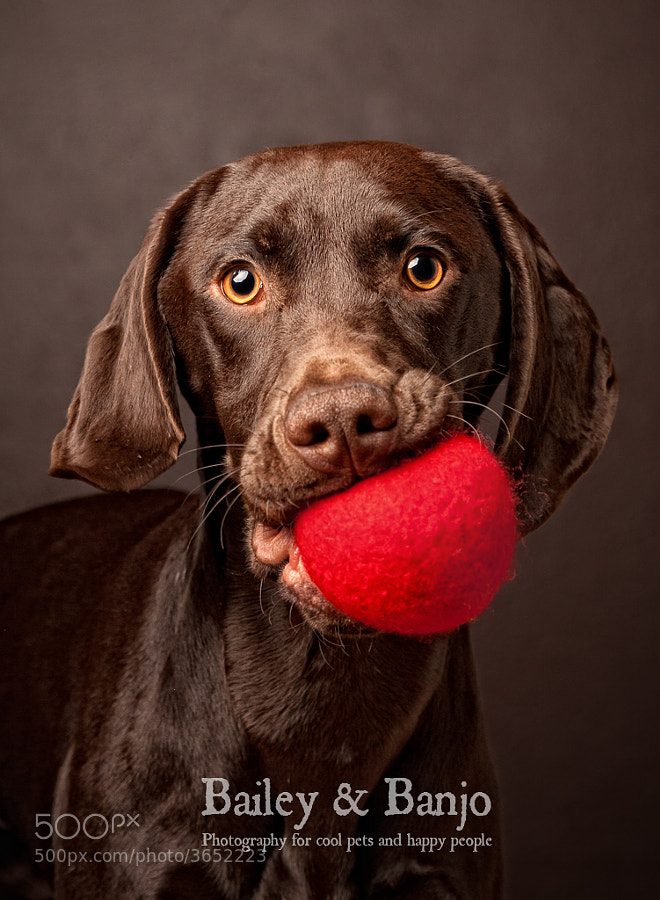 Play Ball - Photographing Pets Essential Tips
