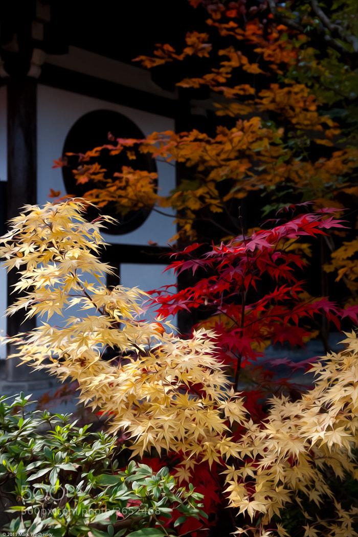 Photograph Autumn Leaves by Mark Wycherley on 500px