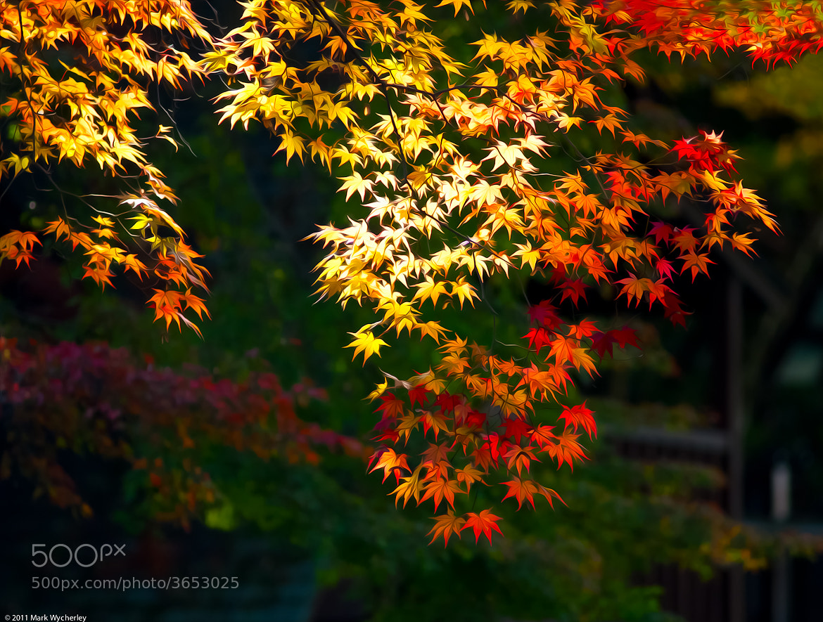 Photograph Autumn Leaves 2 by Mark Wycherley on 500px