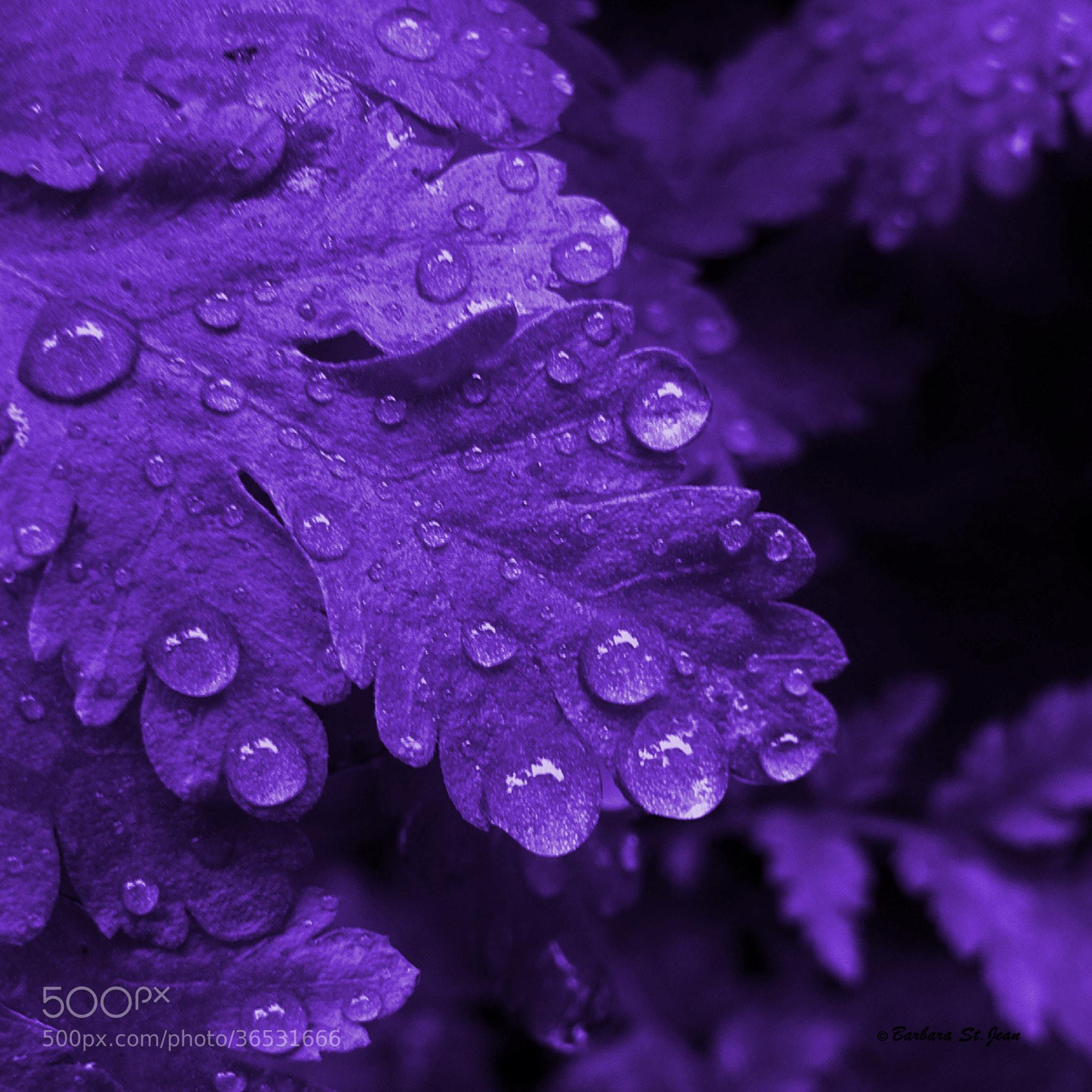 Photograph Purple Rain Abstract Photography by Barbara St ...