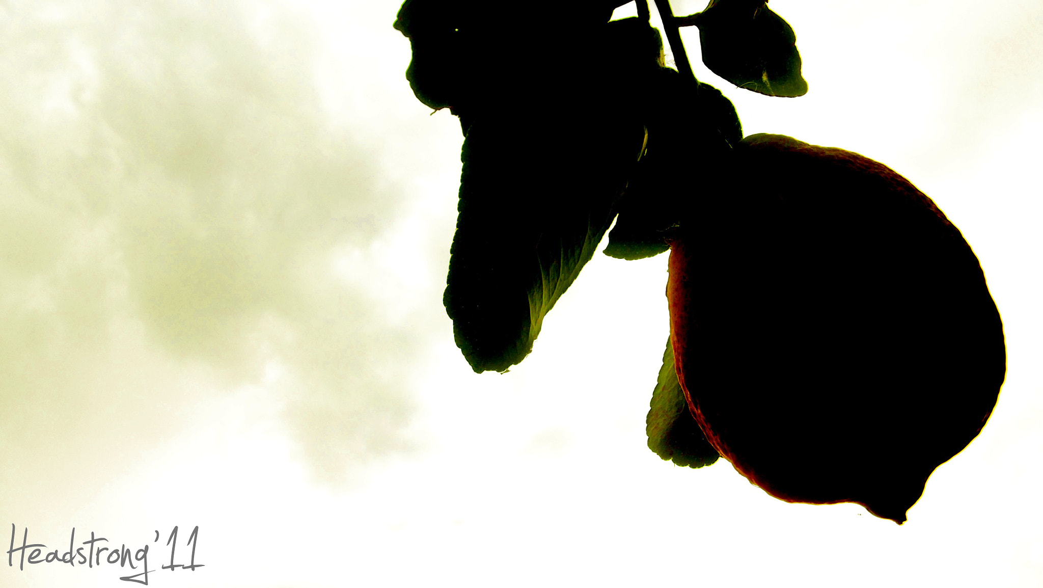 Photograph Under the Lemon Tree by Headstrong '11 on 500px