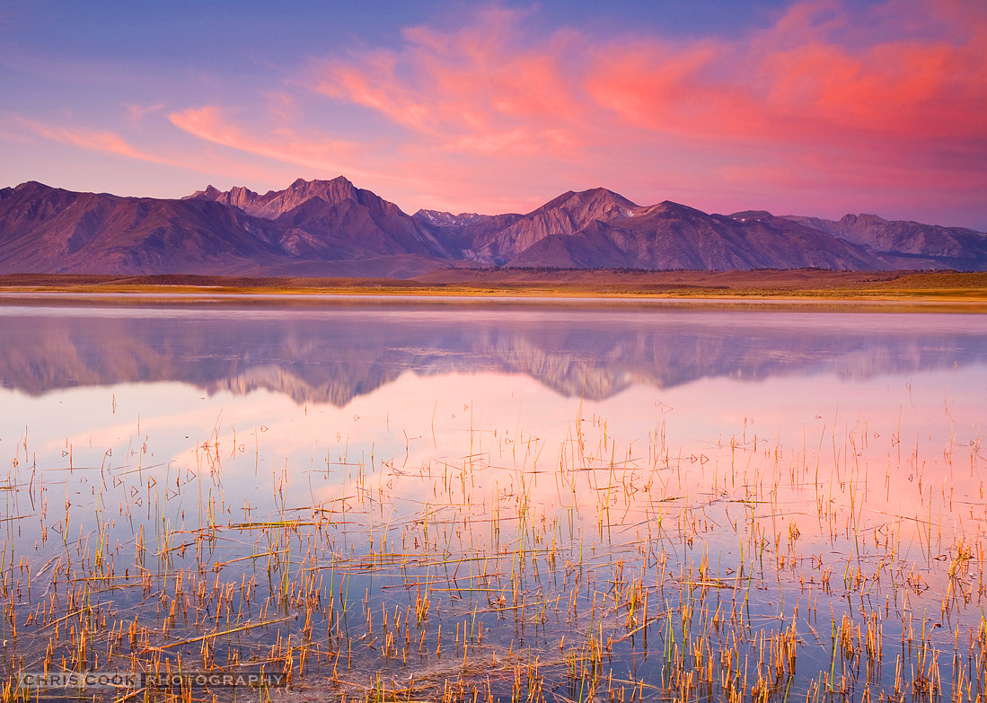 Photograph Sierra Alkali Dawn by Chris Cook on 500px