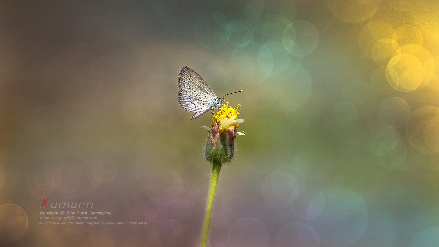 Photograph Buitterfly background by Suwit Gamolglang on 500px