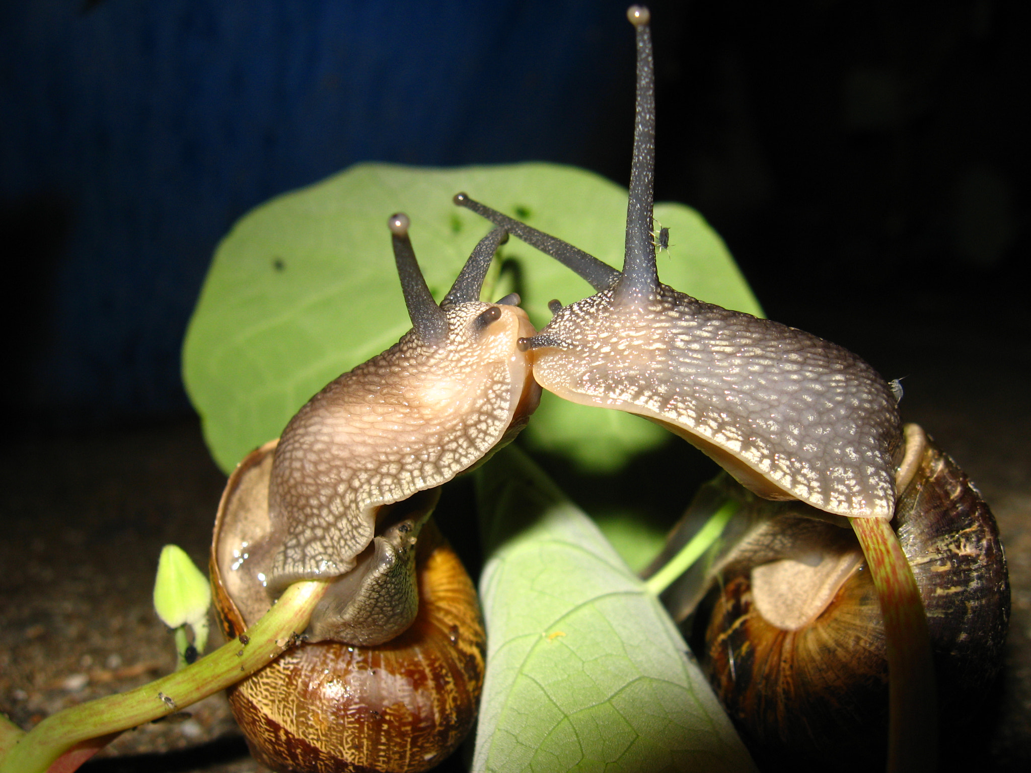 Photograph Snails Kissing by Andrew Allan on 500px